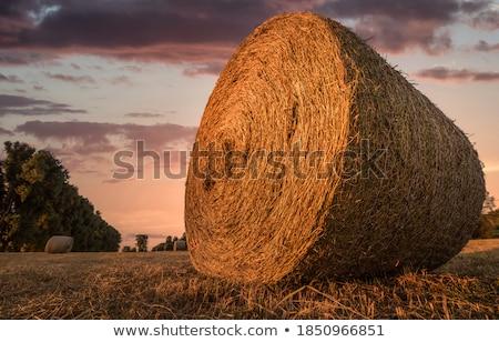 Kuru ot yığını alan doğa düşmek tarım sarı Stok fotoğraf © timbrk