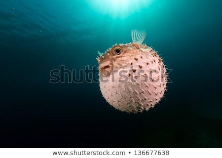 vízalatti · kilátás · hal · napfény · akvárium · nap - stock fotó © photocreo