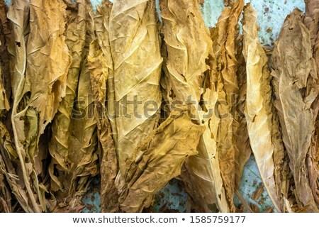 Tabacco taglio primo piano bianco indietro Foto d'archivio © prill
