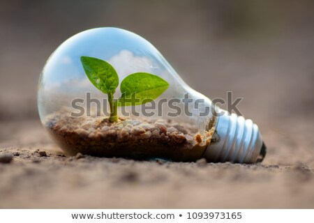 Stock photo: Light bulb with tree inside in hand