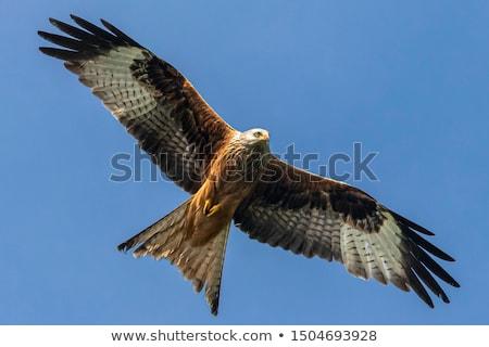 piros · papírsárkány · repülés · madár · kék · toll - stock fotó © mobi68