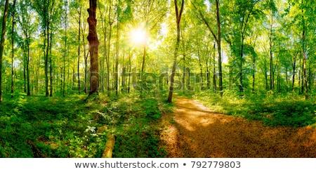 Erdő ösvény zöld fa piros föld út Stock fotó © ziprashantzi