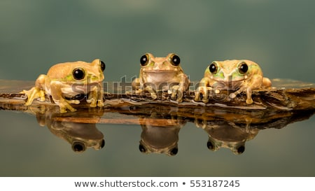 павлин лягушка макроса выстрел сидят винограда Сток-фото © macropixel