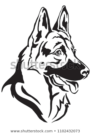 çoban · köpek · portre · siyah · komik · kafa - stok fotoğraf © redpixel