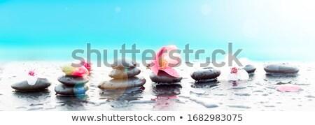 flor · praia · abstrato · mar - foto stock © guffoto