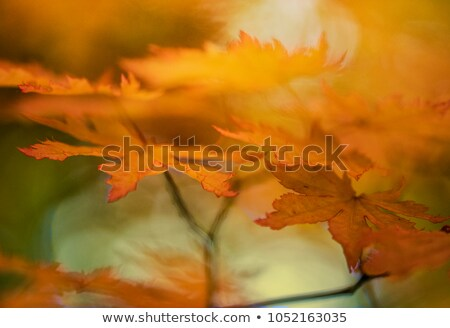 Autum golden tree abstract  Stock photo © dacasdo