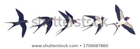 celeiro · imaturo · pássaro · arame · temporada - foto stock © chris2766