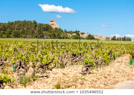 unripe grapevine, vineyards near Chateauneuf-du-Pape, Provence,  Stock photo © phbcz