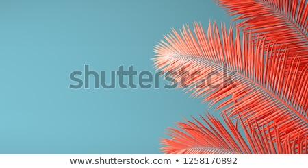 красочный коралловые красный закат пляж Сток-фото © zhekos