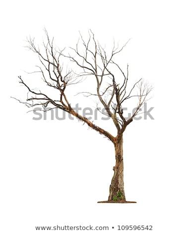 Sozinho secar árvore preto silhueta blue sky Foto stock © Anna_Om