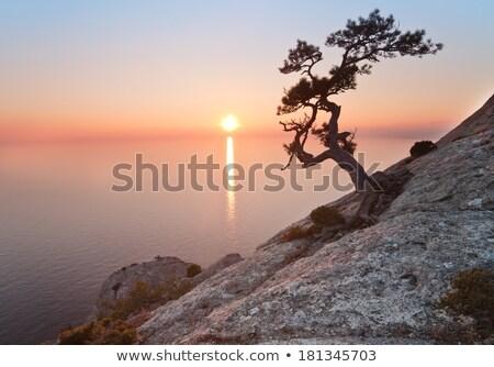 Plaj ağaç sahil Yunanistan deniz Stok fotoğraf © Mps197