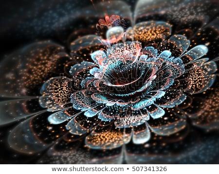 красочный фрактальный цветок цифровой графических Сток-фото © diabluses
