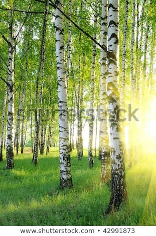 ストックフォト: 木 · 夏 · 森林 · 太陽 · 草 · 日没