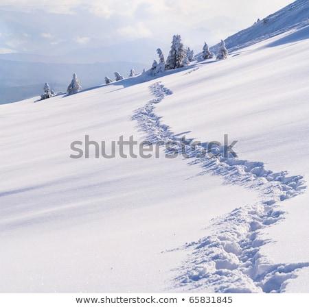 hegyek · tél · tájkép · kunyhó · hegy · erdő - stock fotó © bsani