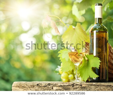 white wine bottles vine and bunch of grapes outdoor stock photo © karandaev