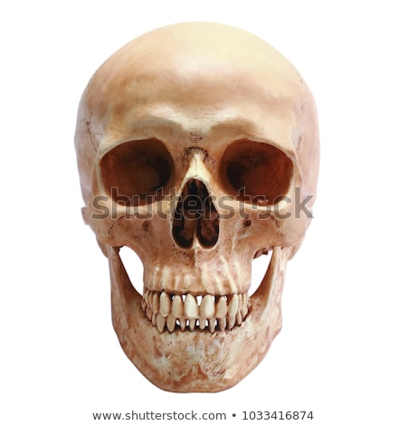 human skull isolated Stock photo © jonnysek