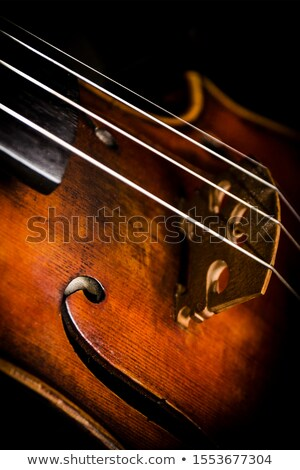 Viola close-up shot Stock photo © mroz