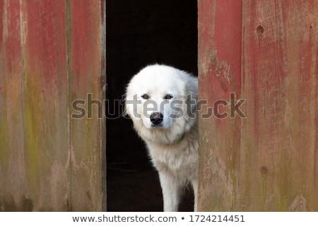 山 · 犬 · 孤立した · 白 · 幸せ · 背景 - ストックフォト © cynoclub
