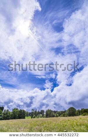 blooming meadow under dramatic sky in the Eifel  Stock photo © meinzahn