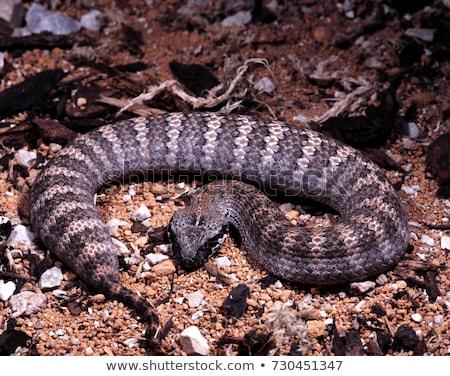 Morte ilustração serpente gráfico perfil frio Foto stock © bluering