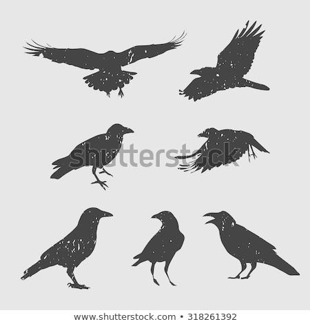 Siluet karga uçuş gökyüzü doğa kuş Stok fotoğraf © pictureguy