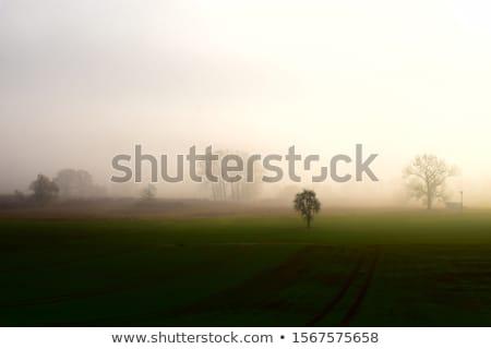 Napfelkelte tájkép erdő természet fák nyár Stock fotó © meinzahn