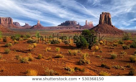 śmierci dolinie pustyni bruk krople Zdjęcia stock © pancaketom
