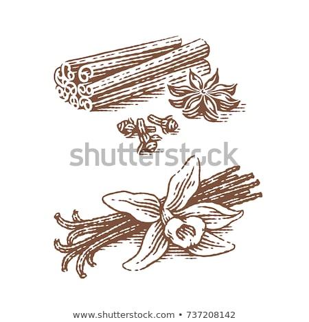 ваниль гвоздика белый продовольствие здорового Spice Сток-фото © Digifoodstock