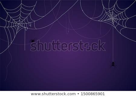 teia · de · aranha · aranha · suspenso · arame · farpado · de · manhã · cedo - foto stock © suerob