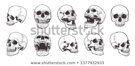 Gyűjtemény koponyák izolált kép textúra kereszt Stock fotó © frescomovie