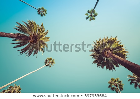 Hollywood avuç içi gökyüzü ağaçlar grup bitki Stok fotoğraf © zurijeta