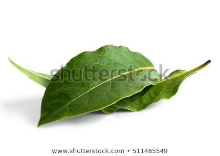 Defne yaprak yalıtılmış beyaz arka plan mutfak Stok fotoğraf © homydesign