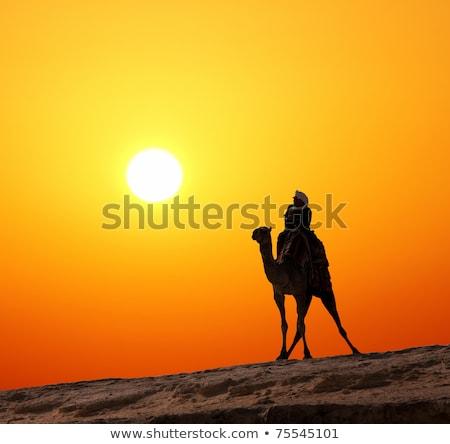 bedouin on camel silhouette against sunrise Stock photo © Mikko