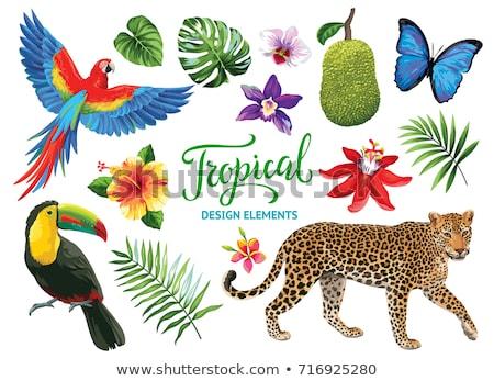girafa · floresta · ilustração · natureza · projeto · verão - foto stock © bluering