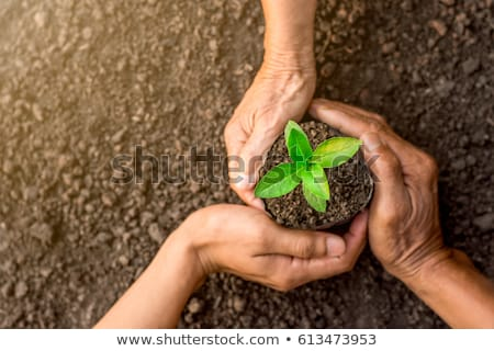 Green sprout in hand Stock photo © Alexan66