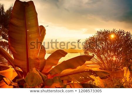 sirályok · tengerpart · naplemente · idő · Franciaország · víz - stock fotó © FreeProd