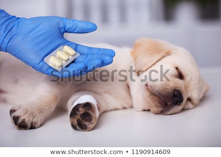 cute · chiot · chien · médication · traitement · bandage - photo stock © ilona75