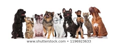 Nieuwsgierig team negen huisdieren permanente Stockfoto © feedough