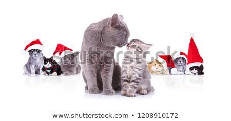 aranyos · macska · visel · mikulás · kalap · közelkép - stock fotó © feedough
