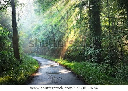 camino · árbol · cielo · flor · nubes · hoja - foto stock © bluering
