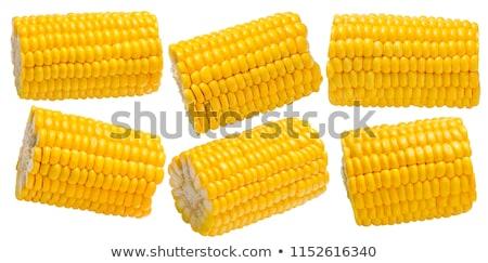 кусок кукурузы Cut уха изолированный Сток-фото © maxsol7