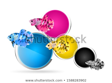 four colorful fishes stock photo © colematt