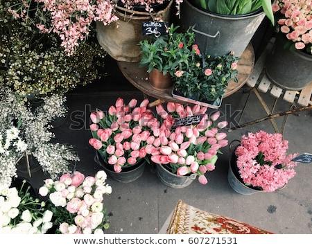 venster · stand · bloemen · collage · speelgoed · geïsoleerd - stockfoto © neirfy