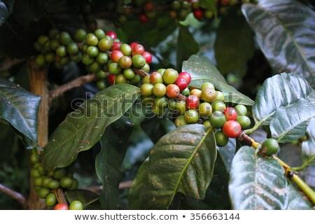 kávé · piros · csésze · közelkép · fából · készült · kávé - stock fotó © galitskaya