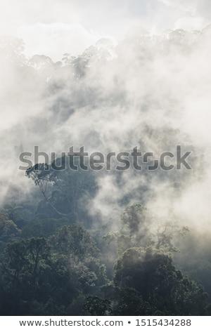 Egzotyczny tropikalnych roślin mokro deszcz tekstury Zdjęcia stock © galitskaya