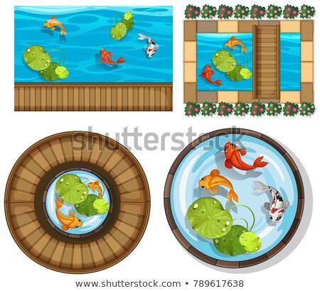 Diferente diseno piscina peces ilustración fondo Foto stock © colematt