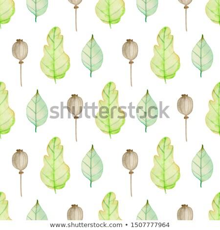 緑 · オーク · 葉 · 夏 · 春 · 抽象的な - ストックフォト © artspace