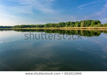 rano · jezioro · piękna · wiosną · trawy - zdjęcia stock © jsnover