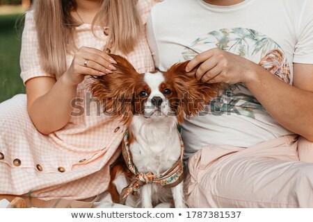 fickó · tart · aranyos · kutya · portré · férfi - stock fotó © vladacanon