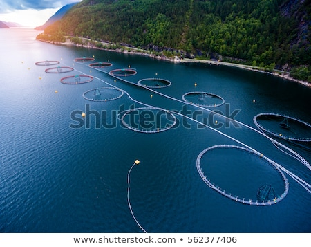 Farm salmon fishing in Norway Stock photo © cookelma